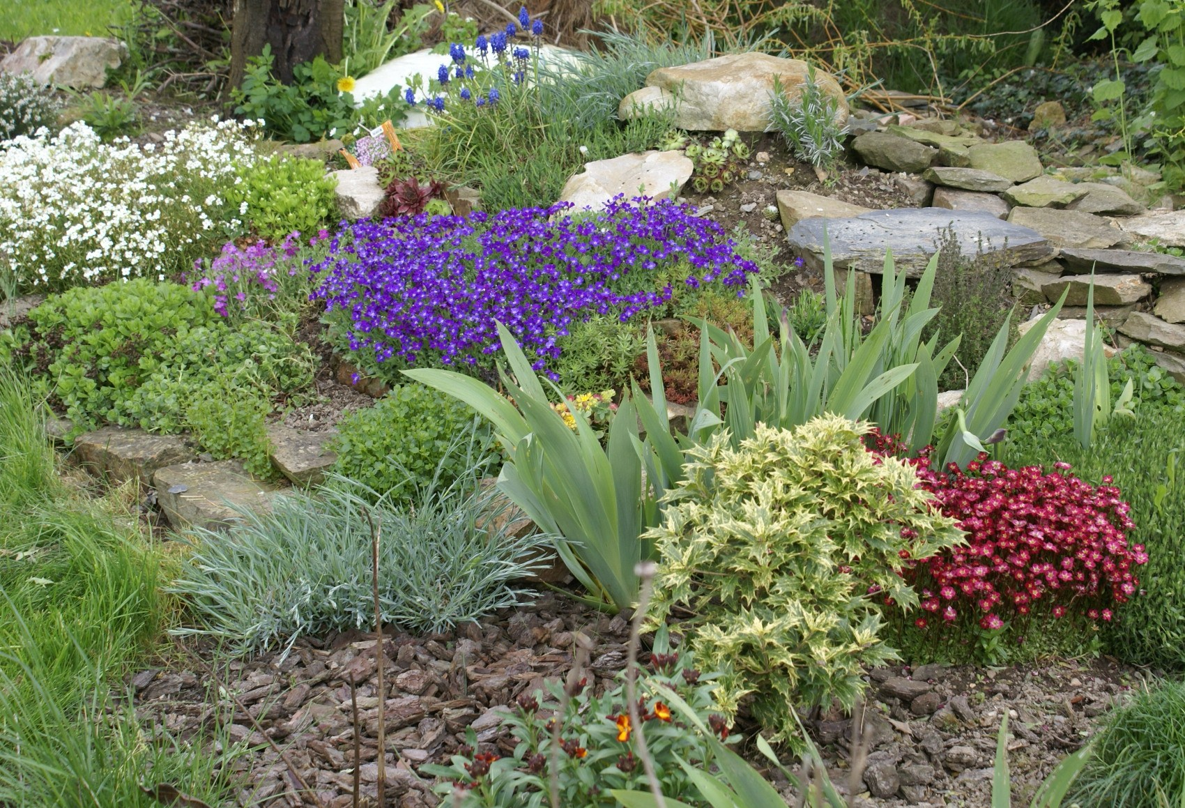 Acheter rocaille jardin meilleures id es cr atives pour for Rocaille jardin